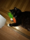 munchkin with carrot