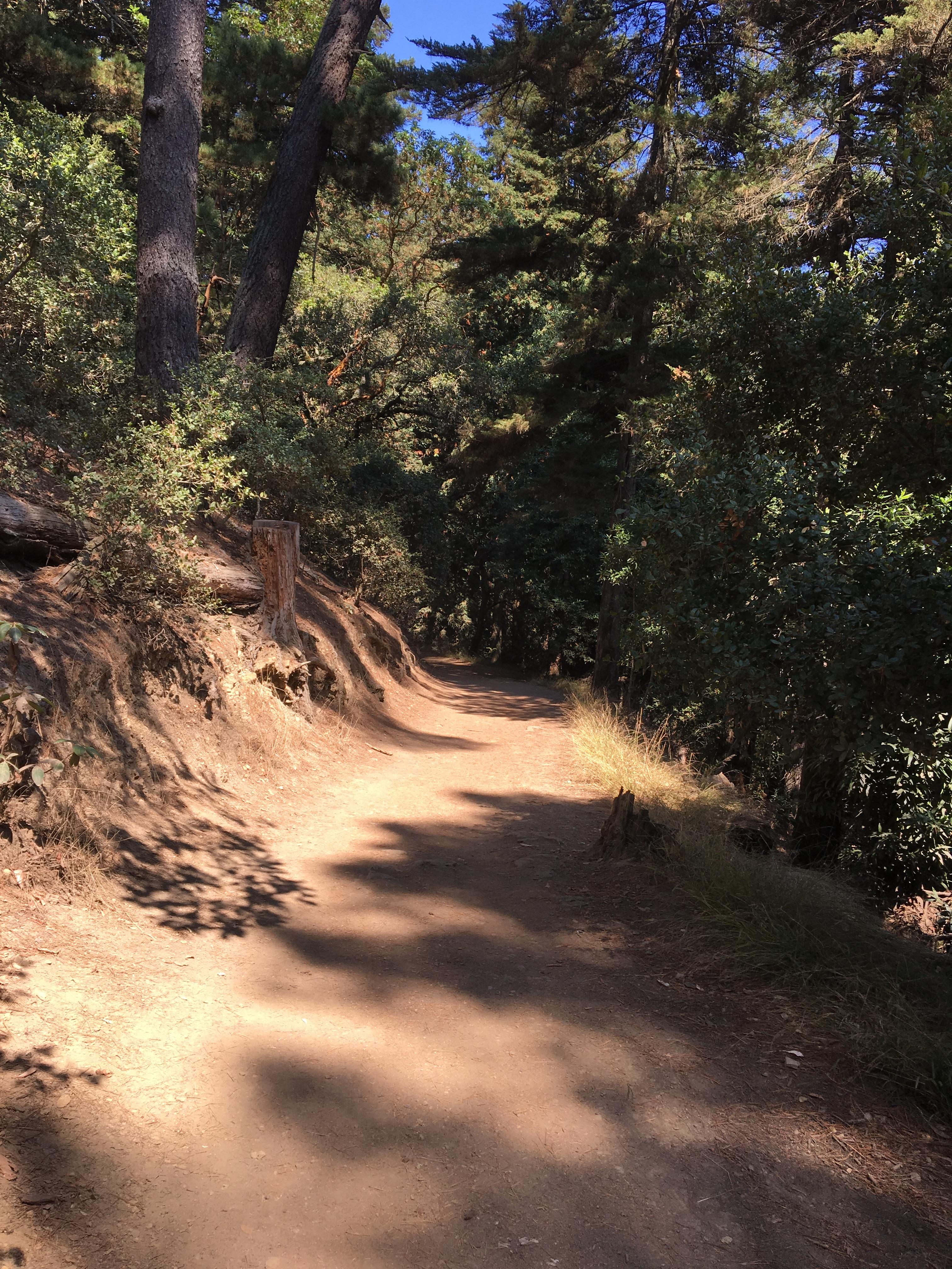 Running Trail Fall Light